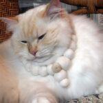 Ékszerek macskaszőrből