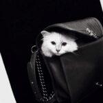Lagerfeld macskája könyvet és sminkkampányt is kap