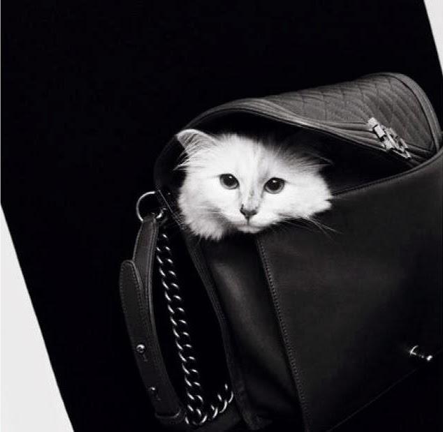 Lagerfeld macskája könyvet és sminkkampányt is kap - jelmezeksztarok, sztar-hirek, minden-mas -