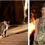 Cica is vonult a kifutón Dior legutóbbi bemutatóján