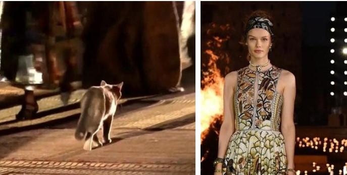 Cica is vonult a kifutón Dior legutóbbi bemutatóján - ujdonsagok -